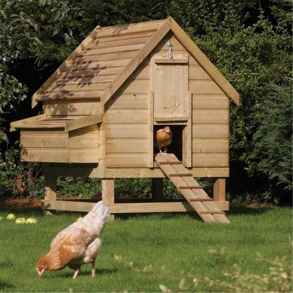 Pressure Treated Chicken Coop Houses 6 Chickens Shedsfirst